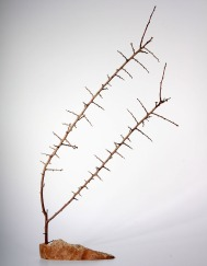 Baum1_700x900_3