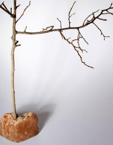 Baum2_700x900_3